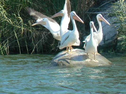 aves laguna de coyuca