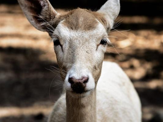 nature-forest-wildlife-wild-deer-zoo-492032-pxhere.com