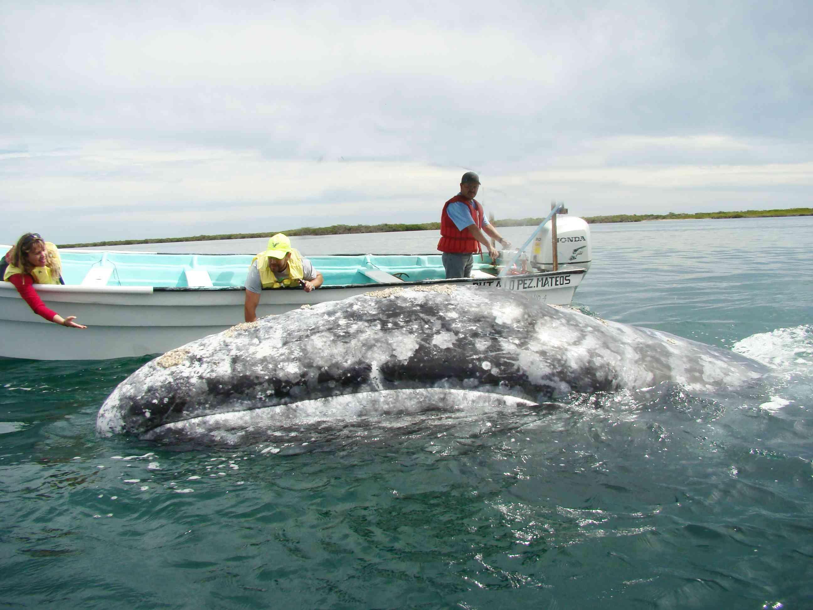 ballenas2_resultado